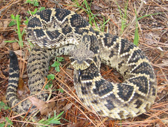 Indianapolis Snake Removal Snake Control Trapping In Indiana